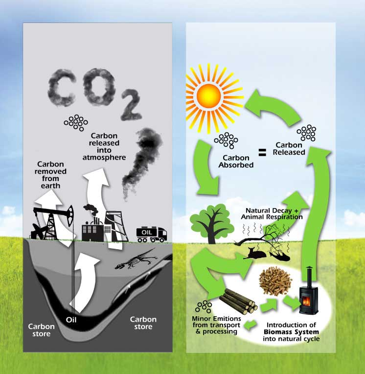 Biomass is Green Energy